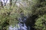 12 Kalaloch River
